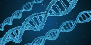 fine genetic mapping